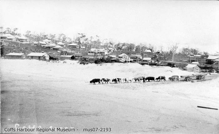 mus07-2193_bullock team on jetty becah 1908